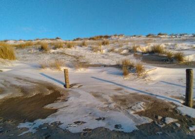 Sneeuw in de duinen bij Petten