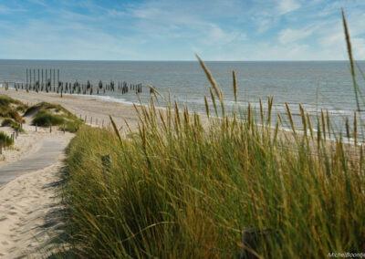 Palendorp en duinen bij Petten